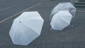 Translucent Shoot-Through Umbrella On Ground stock photo