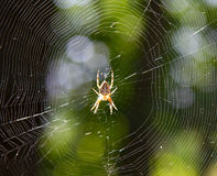 Translucent spider Royalty Free Stock Photo