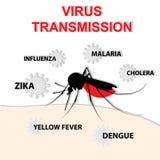 Transmissão do vírus da mordida de mosquito Foto de Stock