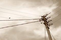 Transmission Image libre de droits