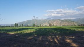 Transmission line tower in the middle of a corn field. Transmission line tower in the middle of a corn plantation field in chilean farm with a mountain stock images