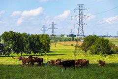 Free Transmission Lines In Farm Pasture Stock Photos - 125751323