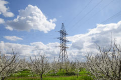 Transmission tower in the flowering plum garden Stock Image