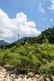 Transmission tower and forest Royalty Free Stock Photos