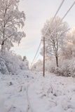 Transmissão de energia elétrica na madeira do inverno Fotos de Stock