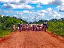 Transpantaneira. Cowboys with a heard of cows on the transpantaneira in Pantanal, brazil Royalty Free Stock Photo