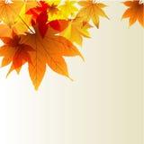 Transparante achtergrond met de herfstbladeren Stock Foto's