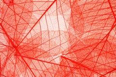 Transparante bladerenachtergrond Royalty-vrije Stock Afbeeldingen