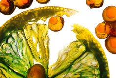 Transparante citrusvrucht en rode kaviaar stock afbeelding