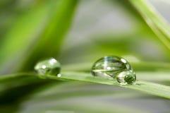Transparante daling van water op een blad Royalty-vrije Stock Foto's