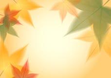 De transparante achtergrond van de herfstbladeren Stock Foto