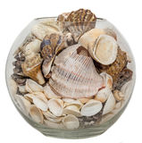 Transparante die kom, vaas met overzeese shells en denneappels, geïsoleerde, witte achtergrond wordt gevuld Stock Foto