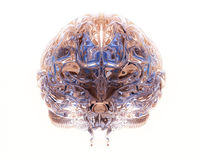 Transparante hersenen Royalty-vrije Stock Afbeelding