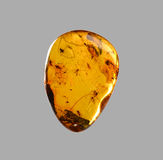 Transparent Amber with insects Stock Photos