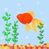 Transparent aquarium sea aquatic background vector illustration habitat water tank house underwater fish algae plants. Stock Images