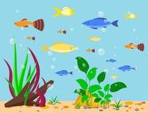 Transparent aquarium sea aquatic background vector illustration habitat water tank house underwater fish algae plants. Transparent aquarium sea aquatic Stock Photo
