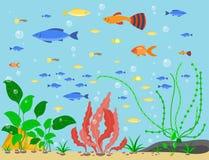 Transparent aquarium sea aquatic background vector illustration habitat water tank house underwater fish algae plants. Royalty Free Stock Photography