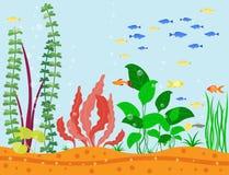 Transparent aquarium sea aquatic background vector illustration habitat water tank house underwater fish algae plants. Stock Photo