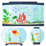 Transparent aquarium vector illustration habitat water tank house underwater fish tank bowl. Stock Photo