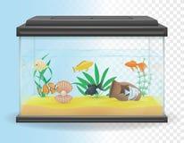 Transparent aquarium vector illustration Stock Photo