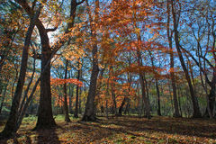 Transparent autumn forest. Royalty Free Stock Photography
