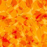 Transparent Autumn Leaves. plus EPS10 Royalty Free Stock Images