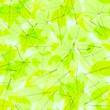 Transparent Autumn Leaves. plus EPS10 Royalty Free Stock Image