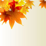 Transparent background with autumn leaves Stock Photos