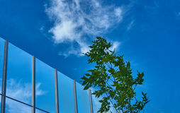 Transparent baffle against the blue sky. Tree and transparent baffle against the blue sky Royalty Free Stock Images