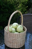 Transparent Blanche apples in basket. Swedish apples - Transparent Blanche - from garden in basket on glass-table Stock Photo