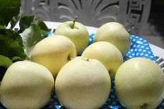 Transparent Blanche apples - a summer apple very sweet and delicious Stock Image