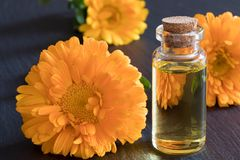 A bottle of calendula essential oil on a dark background Royalty Free Stock Photography