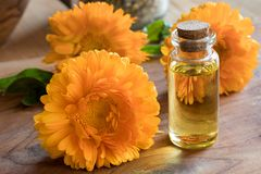 A bottle of calendula essential oil with calendula flowers Royalty Free Stock Photography