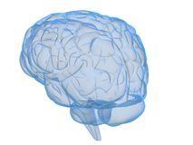 Transparent brain Royalty Free Stock Photos