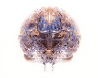 Transparent brain Royalty Free Stock Image