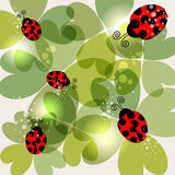 Transparent clover and ladybug background Stock Photography