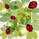 Transparent clover and ladybug background Stock Photography