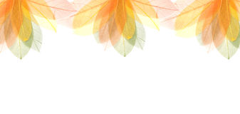 Transparent colorful summer  leaves frame Stock Images