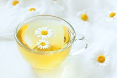 Transparent cup of healthy chamomile herbal tea Royalty Free Stock Photos