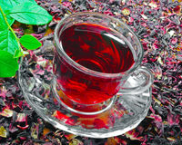 Transparent cup of Hibiscus tea Stock Images