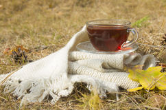 Transparent cup of hot tea on white warm scarf at autumn (fall season) Royalty Free Stock Photography