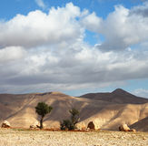 A transparent day in Judean desert Stock Images