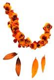 Transparent dried pressed orange mottled  marigold petals Stock Photo