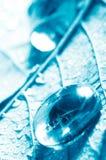 Transparent drop of water on a sheet Royalty Free Stock Photos