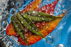 Transparent drops of autumn rain are located against the blue background with green and  yellow-orange leaves.