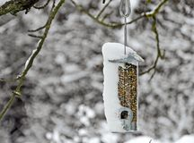 Transparent feed dispenser partly snow-covered Royalty Free Stock Image