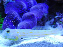 Transparent fish Royalty Free Stock Images