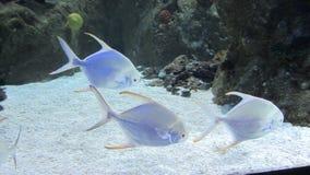Transparent fish Stock Image