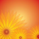 Transparent flower Royalty Free Stock Images