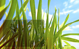 Transparent Frame on Grass Background Stock Images